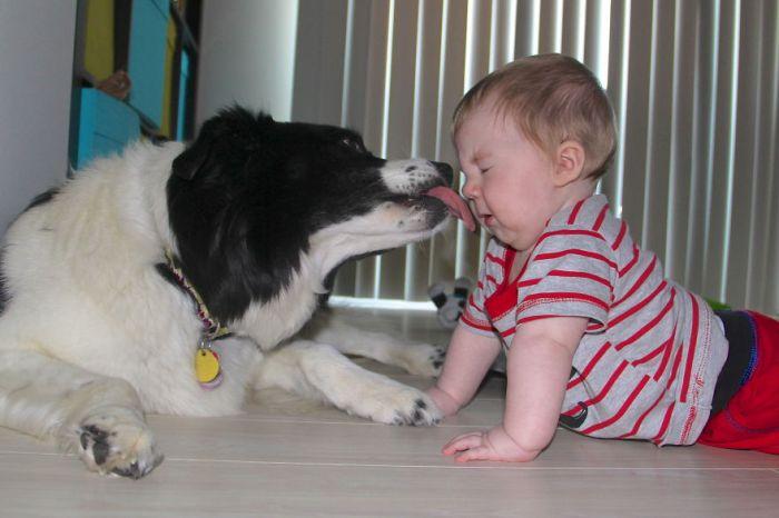 Cães grandes e crianças pequenas (17)