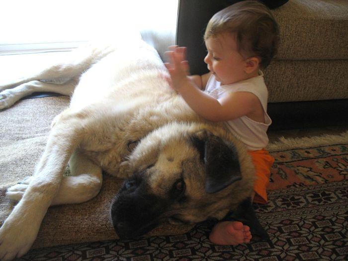 Cães grandes e crianças pequenas (18)