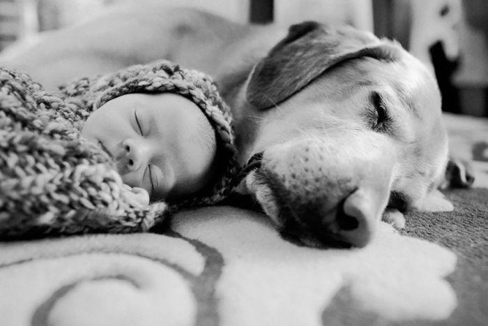 Cães grandes e crianças pequenas (2)