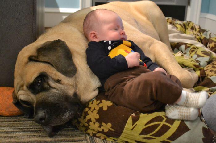 Cães grandes e crianças pequenas (21)