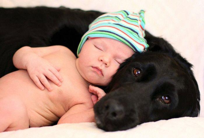 Cães grandes e crianças pequenas (22)