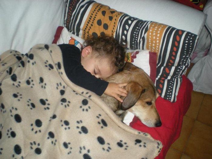 Cães grandes e crianças pequenas (23)
