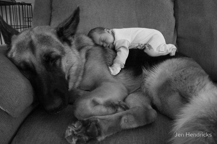 Cães grandes e crianças pequenas (24)