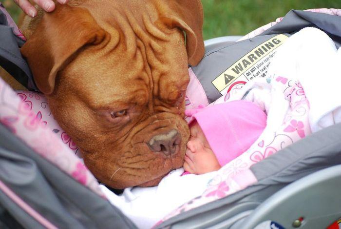 Cães grandes e crianças pequenas (25)