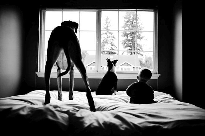 Cães grandes e crianças pequenas (27)