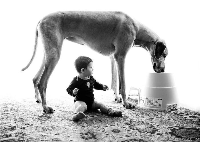 Cães grandes e crianças pequenas (3)