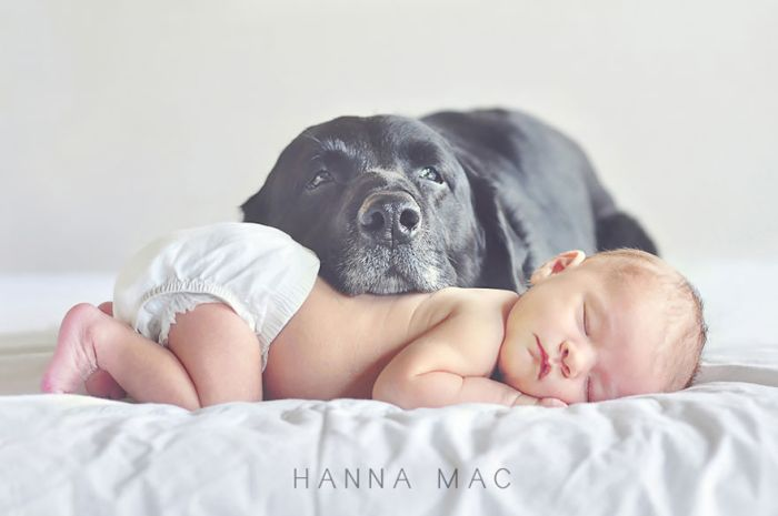 Cães grandes e crianças pequenas (32)