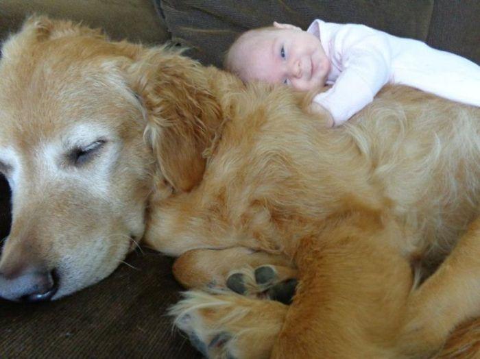 Cães grandes e crianças pequenas (35)