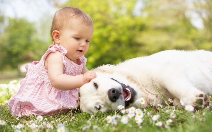 Cães grandes e crianças pequenas (38)