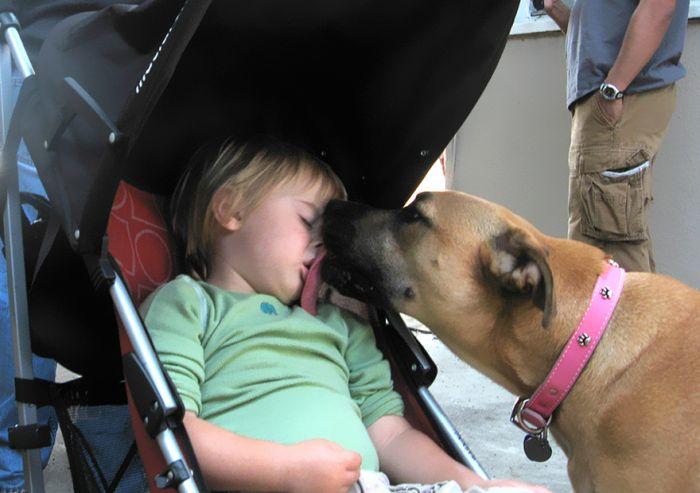 Cães grandes e crianças pequenas (39)