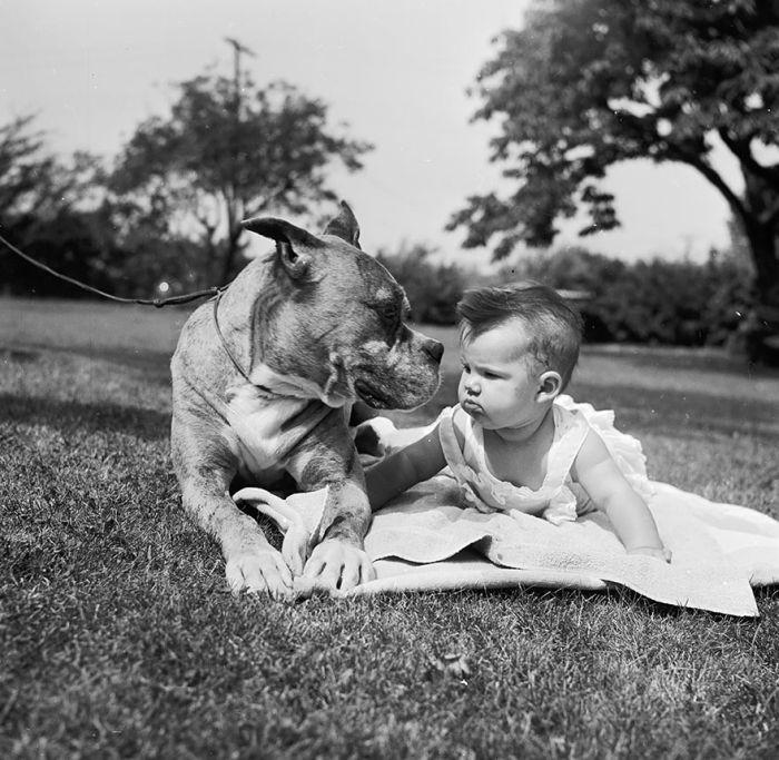 Cães grandes e crianças pequenas (4)