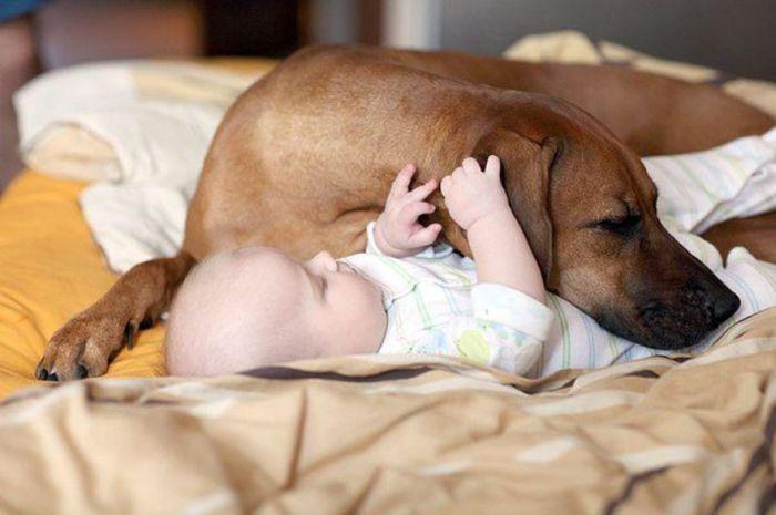 Cães grandes e crianças pequenas (41)