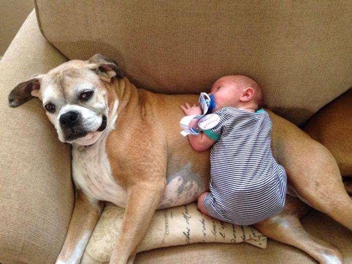 Cães grandes e crianças pequenas (42)