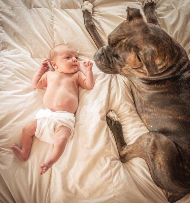 Cães grandes e crianças pequenas (44)