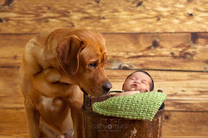 Cães grandes e crianças pequenas (45)