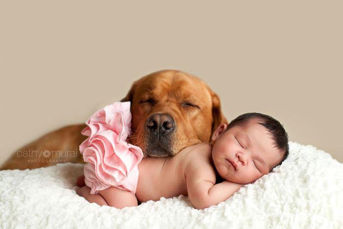 Cães grandes e crianças pequenas (46)