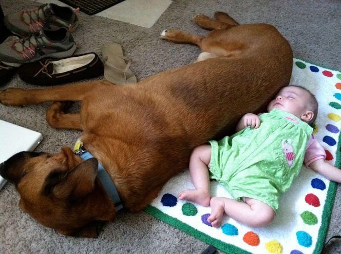 Cães grandes e crianças pequenas (5)