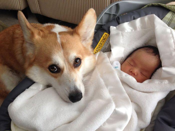 Cães grandes e crianças pequenas (7)