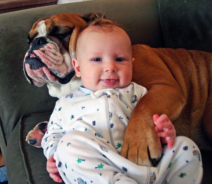 Cães grandes e crianças pequenas (8)