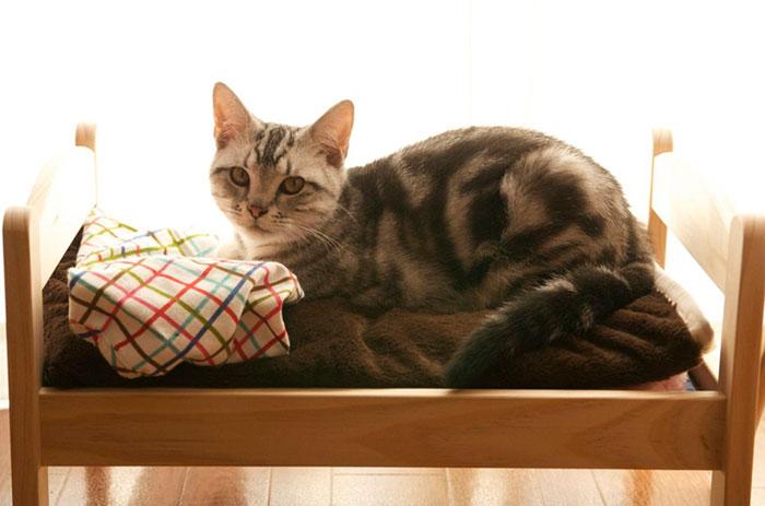 Camas de bonecas transformadas em camas para gatos (6)