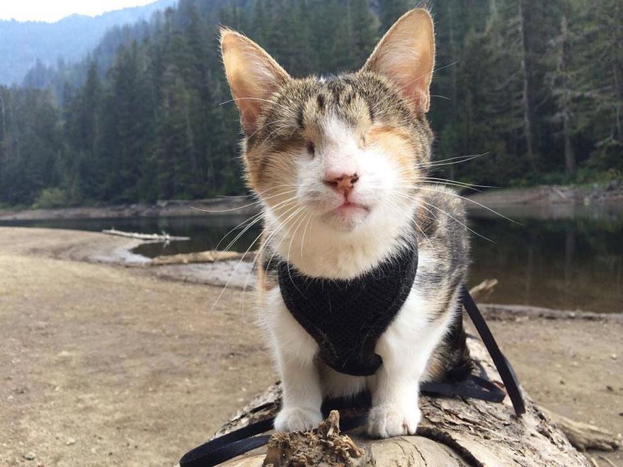 Conheça Honey Bee, um gatinho cego que adora caminhar (1)