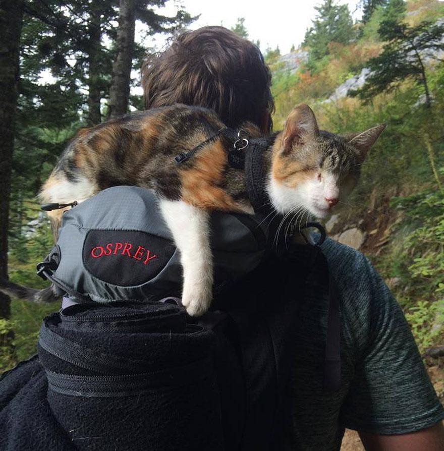 Conheça Honey Bee, um gatinho cego que adora caminhar (2)