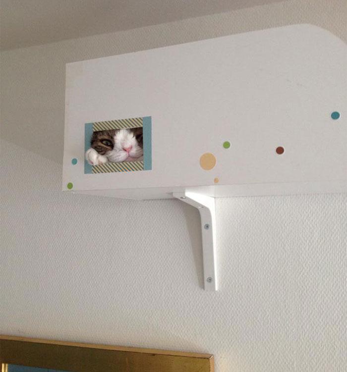 Conheça-Monty-O-gato-adorável-com-um-rosto-incomum-Blog-Animal (12)