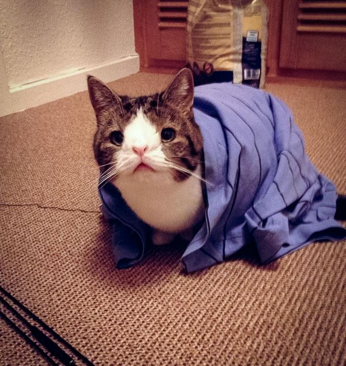 Conheça-Monty-O-gato-adorável-com-um-rosto-incomum-Blog-Animal (13)