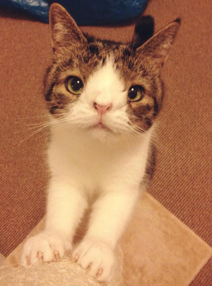 Conheça-Monty-O-gato-adorável-com-um-rosto-incomum-Blog-Animal (2)