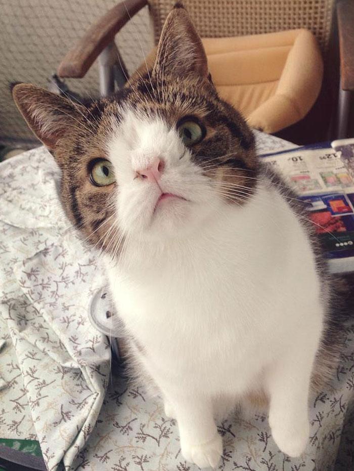 Conheça-Monty-O-gato-adorável-com-um-rosto-incomum-Blog-Animal (4)