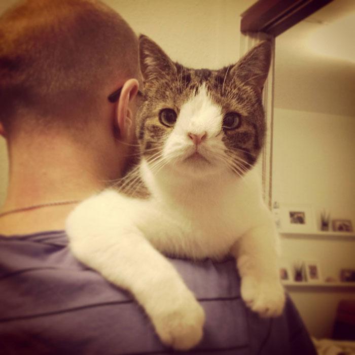 Conheça-Monty-O-gato-adorável-com-um-rosto-incomum-Blog-Animal (5)