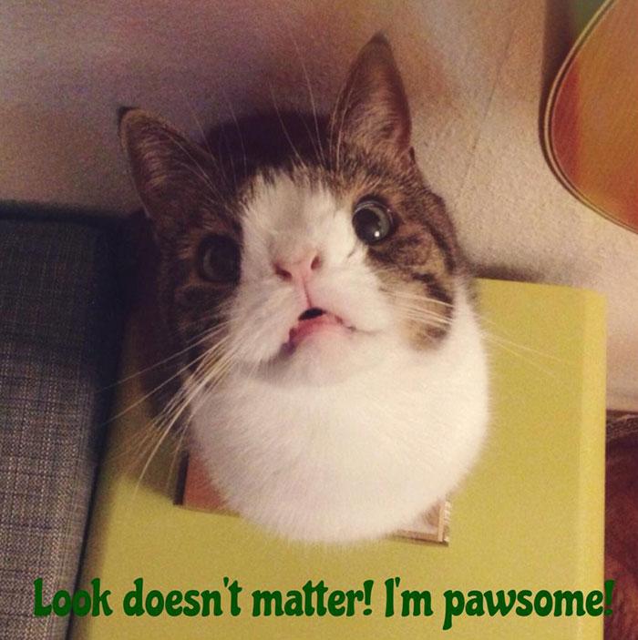 Conheça-Monty-O-gato-adorável-com-um-rosto-incomum-Blog-Animal (8)