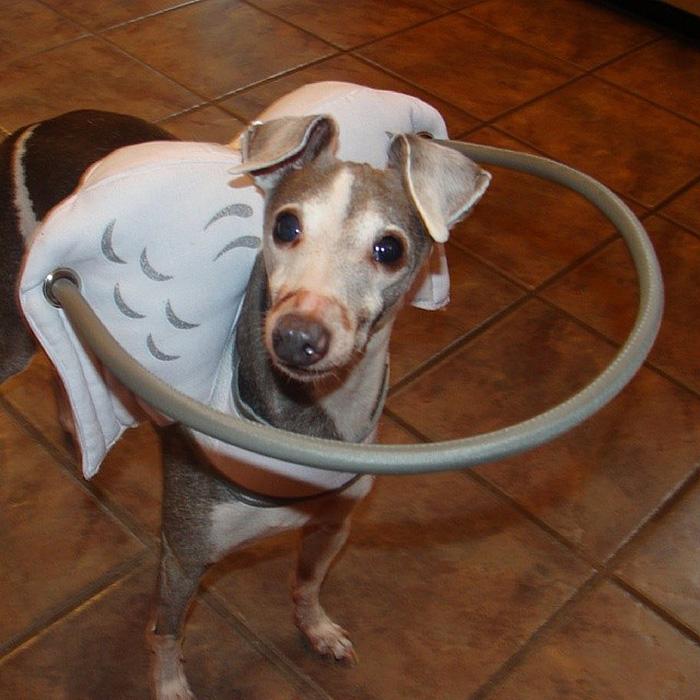 Dispositivo-angelical-salva-cães-cegos-de-se-machucarem-Blog-Animal (10)
