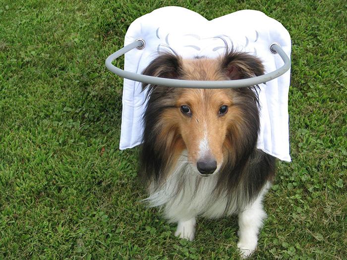 Dispositivo-angelical-salva-cães-cegos-de-se-machucarem-Blog-Animal (11)