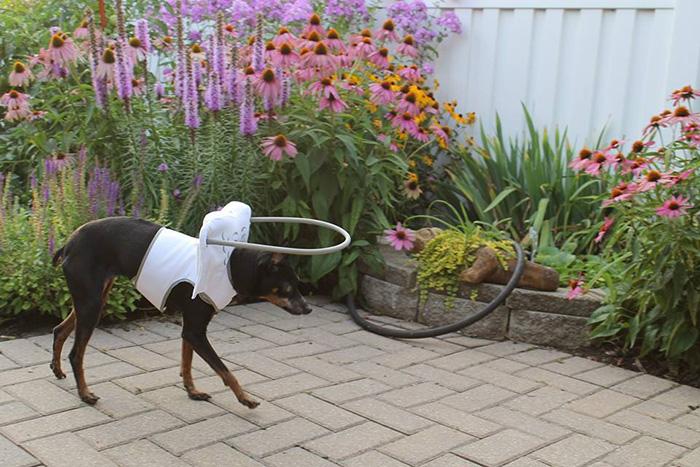 Dispositivo-angelical-salva-cães-cegos-de-se-machucarem-Blog-Animal (12)