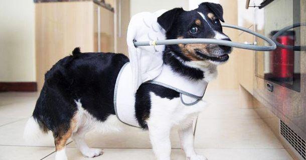 Dispositivo-angelical-salva-cães-cegos-de-se-machucarem-Blog-Animal (14)