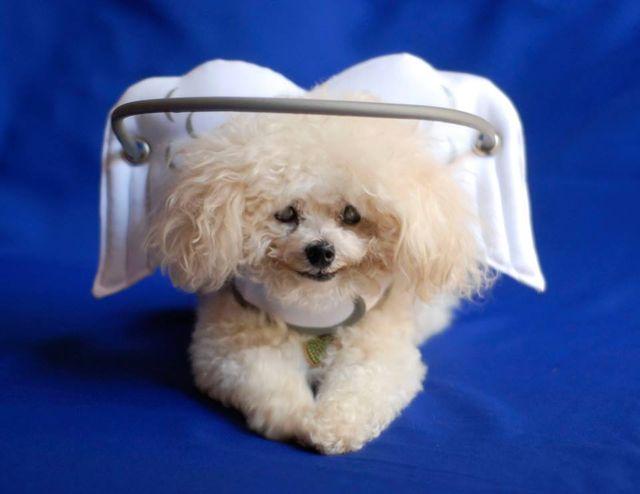 Dispositivo angelical salva cães cegos de se machucarem