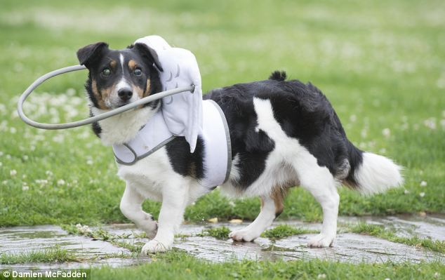 Dispositivo-angelical-salva-cães-cegos-de-se-machucarem-Blog-Animal (4)