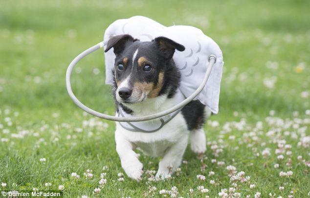 Dispositivo-angelical-salva-cães-cegos-de-se-machucarem-Blog-Animal (5)