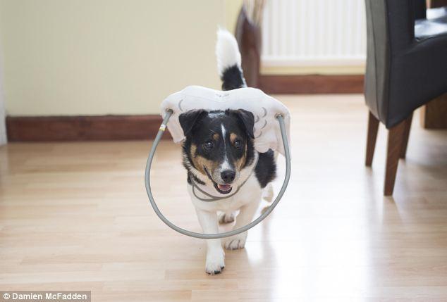 Dispositivo-angelical-salva-cães-cegos-de-se-machucarem-Blog-Animal (6)