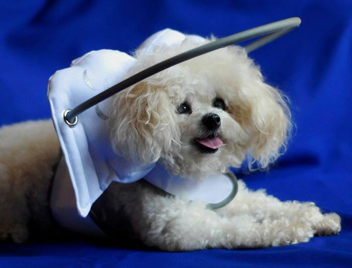 Dispositivo-angelical-salva-cães-cegos-de-se-machucarem-Blog-Animal (8)