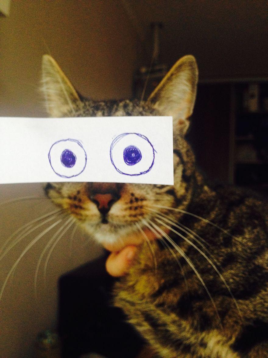 Gatos-com-olhos-de-desenhos-engraçados-é-a-nova-moda-no-Japão-Blog-Animal (13)