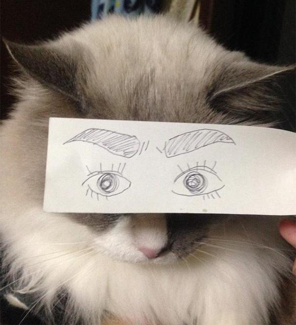 Gatos-com-olhos-de-desenhos-engraçados-é-a-nova-moda-no-Japão-Blog-Animal (15)