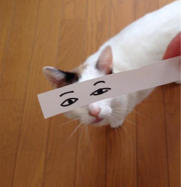 Gatos-com-olhos-de-desenhos-engraçados-é-a-nova-moda-no-Japão-Blog-Animal (16)