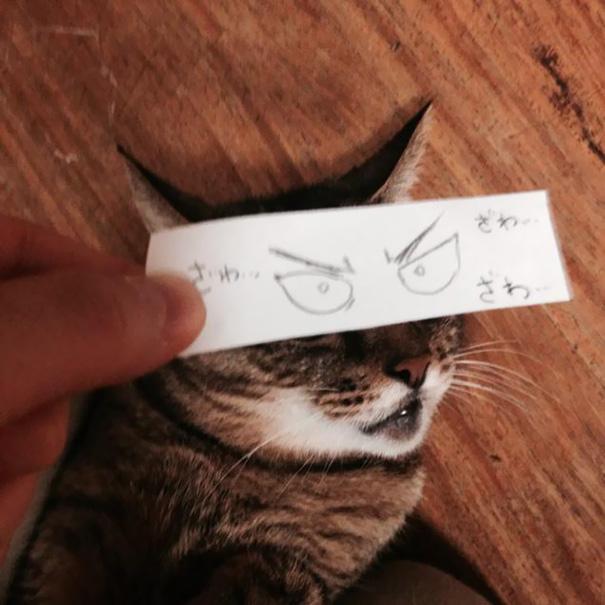 Gatos-com-olhos-de-desenhos-engraçados-é-a-nova-moda-no-Japão-Blog-Animal (17)