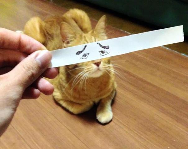 Gatos-com-olhos-de-desenhos-engraçados-é-a-nova-moda-no-Japão-Blog-Animal (19)
