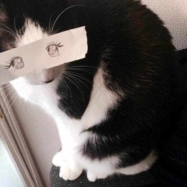 Gatos-com-olhos-de-desenhos-engraçados-é-a-nova-moda-no-Japão-Blog-Animal (20)