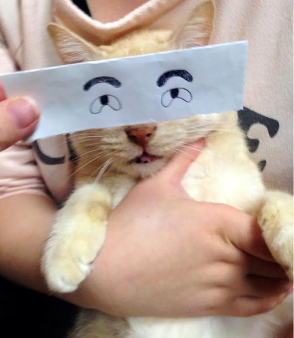 Gatos-com-olhos-de-desenhos-engraçados-é-a-nova-moda-no-Japão-Blog-Animal (21)