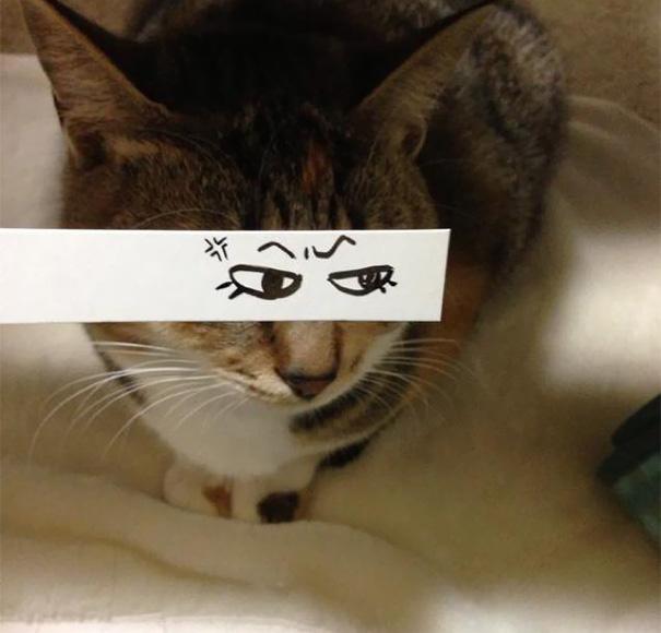 Gatos-com-olhos-de-desenhos-engraçados-é-a-nova-moda-no-Japão-Blog-Animal (22)