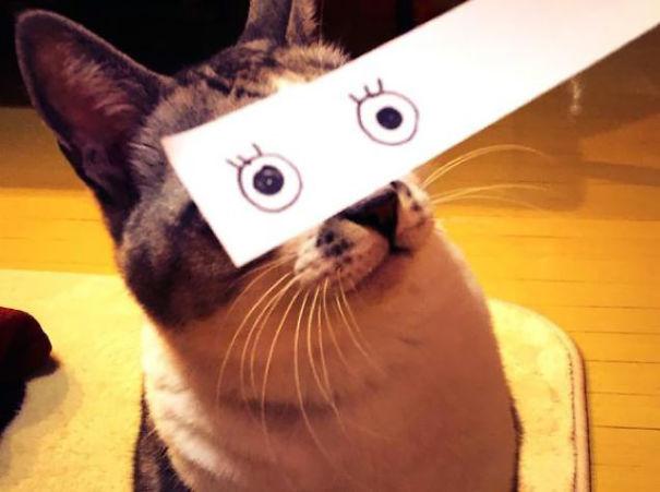 Gatos-com-olhos-de-desenhos-engraçados-é-a-nova-moda-no-Japão-Blog-Animal (24)